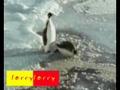 Rasteira de pinguim