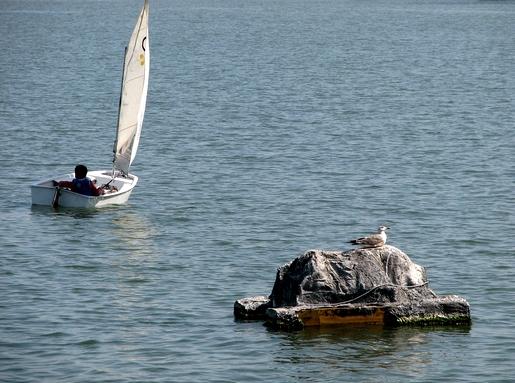 gaivota em terra e puto no mar