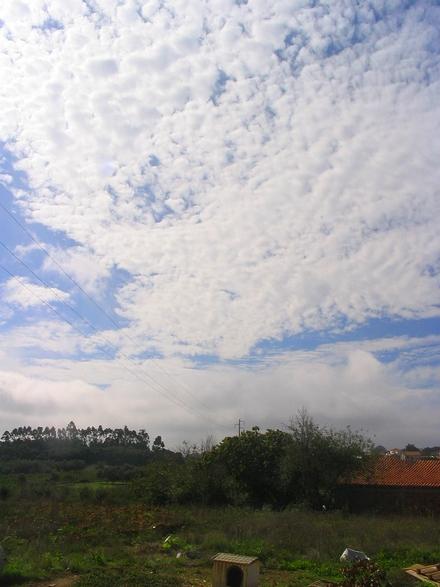 bordado celeste