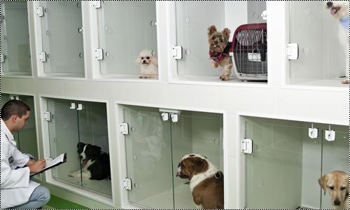 Clínica veterinária 15166025_MUF8z